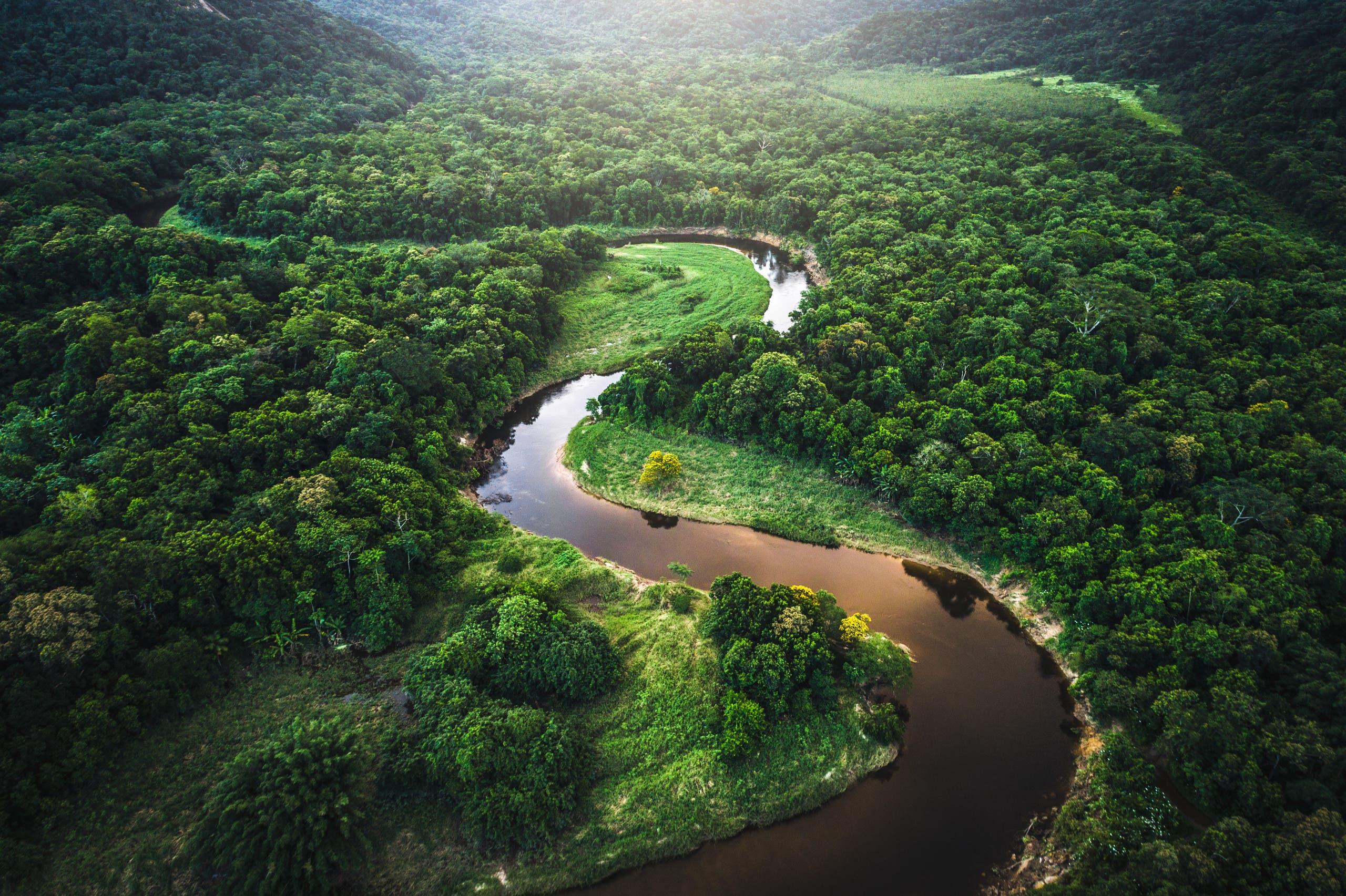 من غابات الامازون