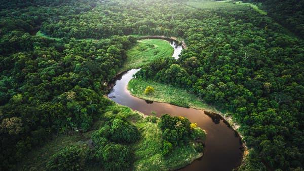 رئة العالم تنازع.. الأمازون تتحول سهولاً قاحلة