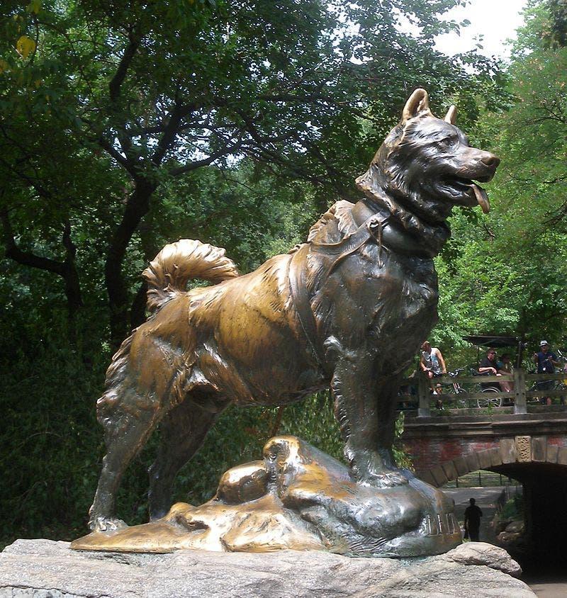 تمثال للكلب بالتو بسنترال بارك بنيويورك