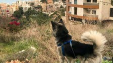 Pets killed, abandoned in Lebanon due to false link to coronavirus