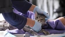 حذارِ من استخدام المعقمات على الحيوانات الأليفة