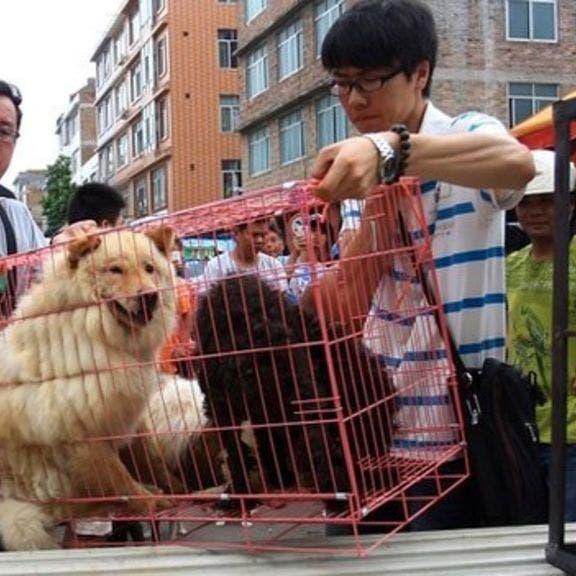 رويترز: أول مدينة صينية تحظر تناول لحوم القطط والكلاب