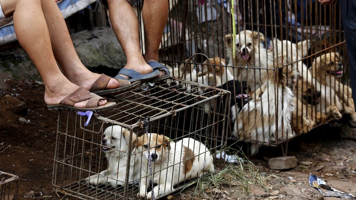 Vendors wait for customers as dogs are kept in a cage at Dashichang dog market ahead of a local dog meat festival in Yulin. (Reuters)