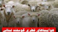 هواپیماهای قطری گوسفند لبنانی جابجا میکنند یا اسلحه ایرانی؟