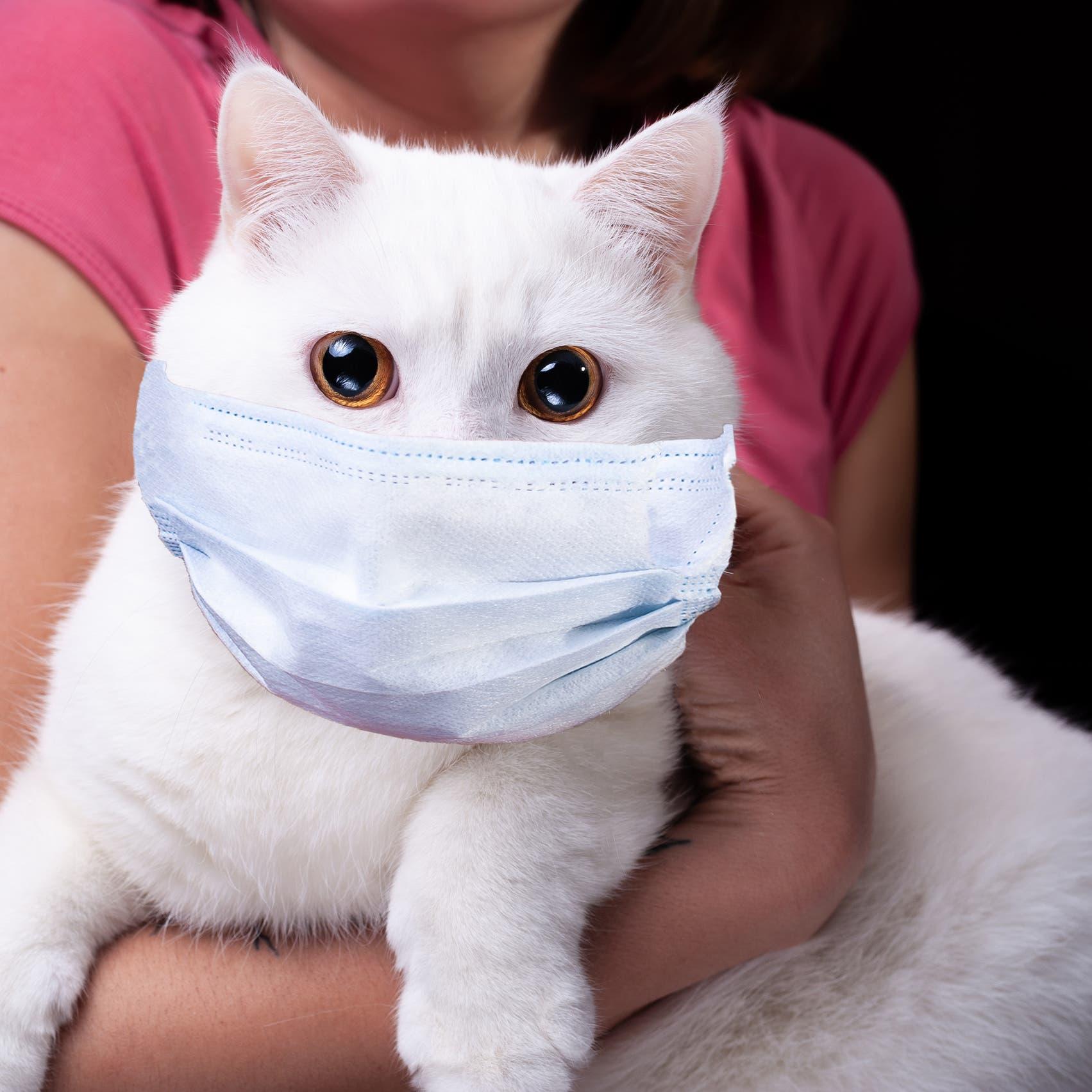 عدوى كورونا تتوقف عند الحيوان.. تصيبه ولا يصيبك