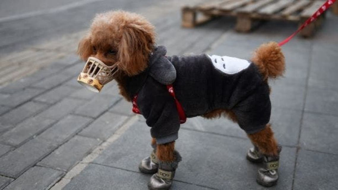 كورونا كلاب