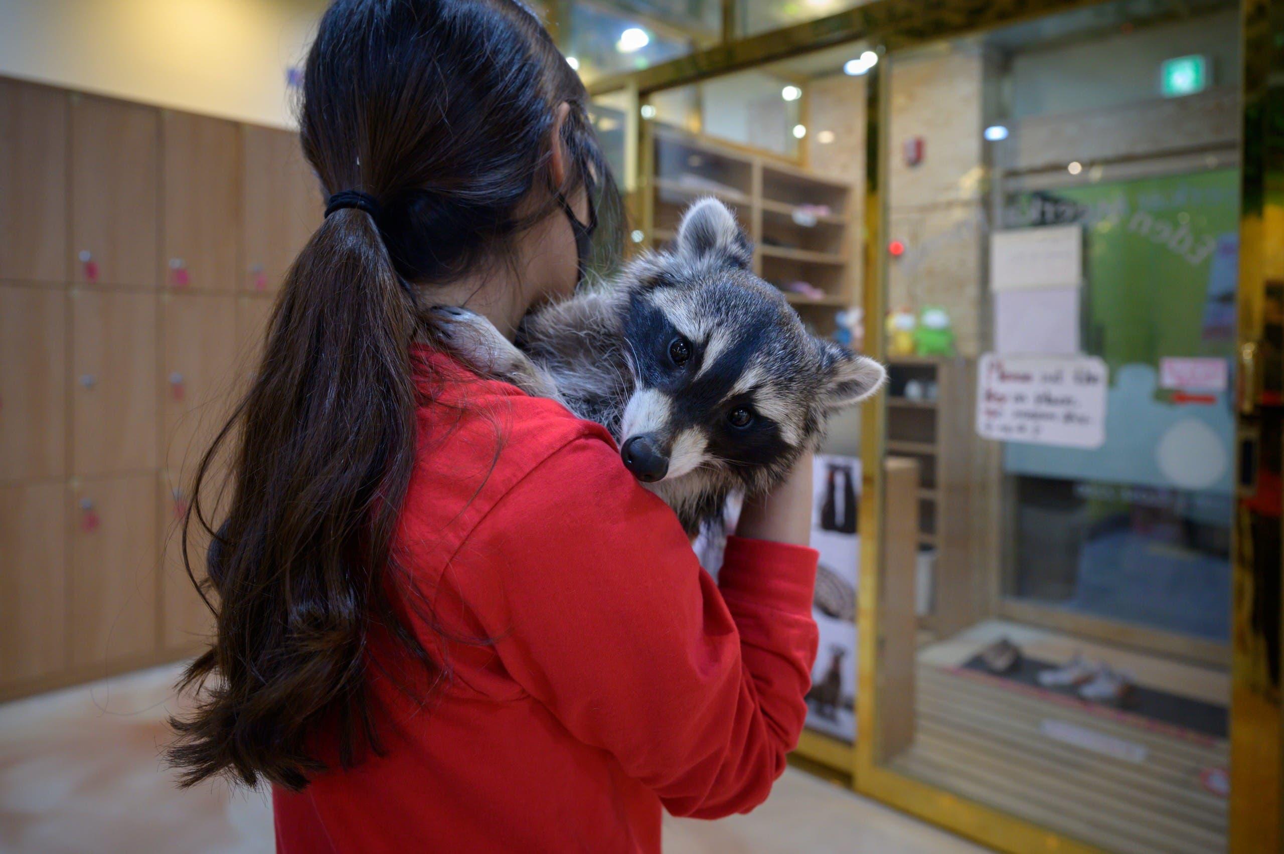 عاملة تحمل أحد الحيوانات البرية في مقى للحيوانات فارغ من الزبائن في كوريا