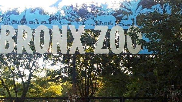 Coronavirus: Tiger at NYC's Bronx Zoo tests positive