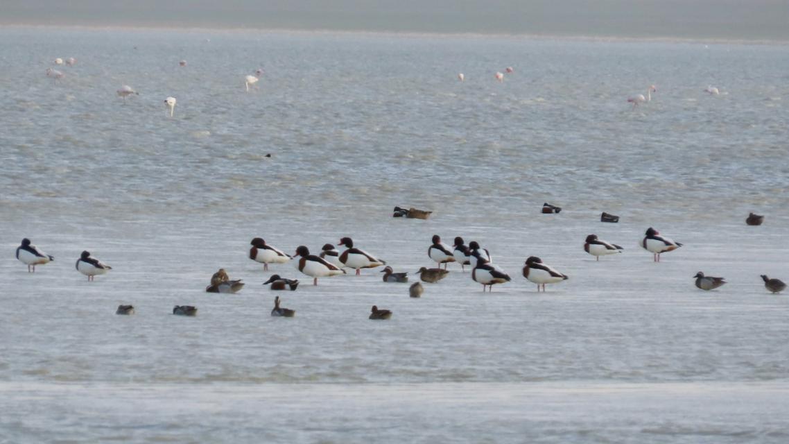حيرة سيفا الشهيرة بـجنة الطيور