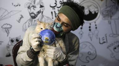 دراسة تؤكد إصابة القطط بكورونا.. الصحة العالمية تتحقق