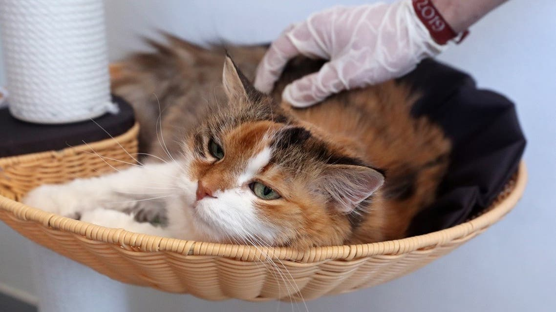 Charlie, a 15-year-old cat, is seen at the animal shelter Sans Collier, ready to be adopted in Perwez, Belgium. (Reuters)