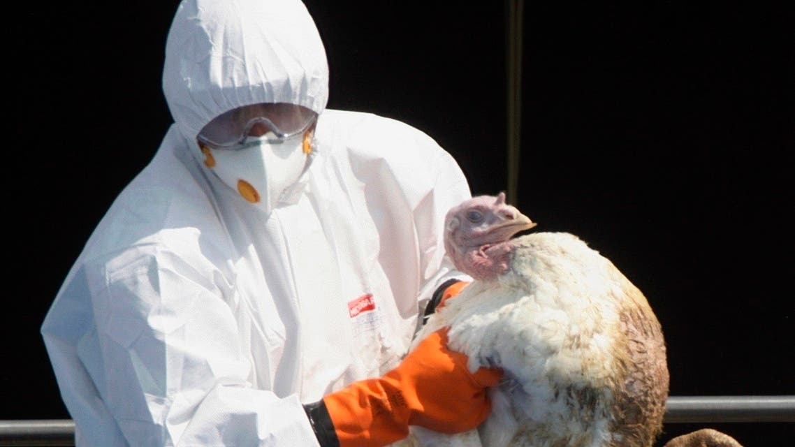 A worker throws a turkey into a container at a farm in Tisova 160 km (99 miles) east of Prague June, 21, 2007.  (Reuters)