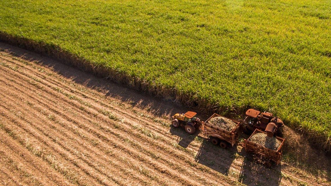 أميركا زراعة
