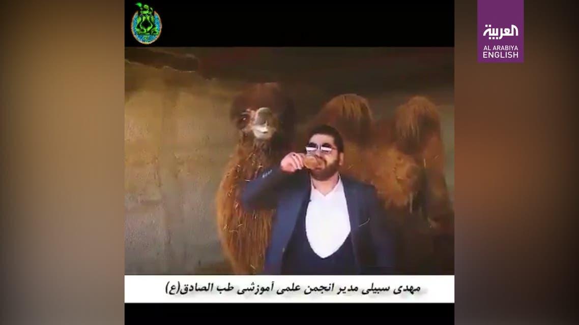 Iranian 'Islamic medicine specialist' says camel urine cures coronavirus