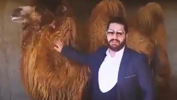 توقيف إيراني يعالج كورونا ببول البعير.. وفيديو الأزمة