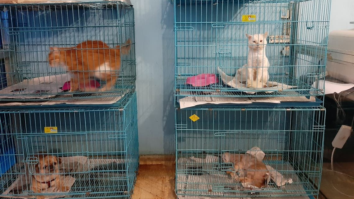 Cats sit in crates in Dr. Fouad el Hajj's after being abandoned in Lebanon. (Abby Sewell)