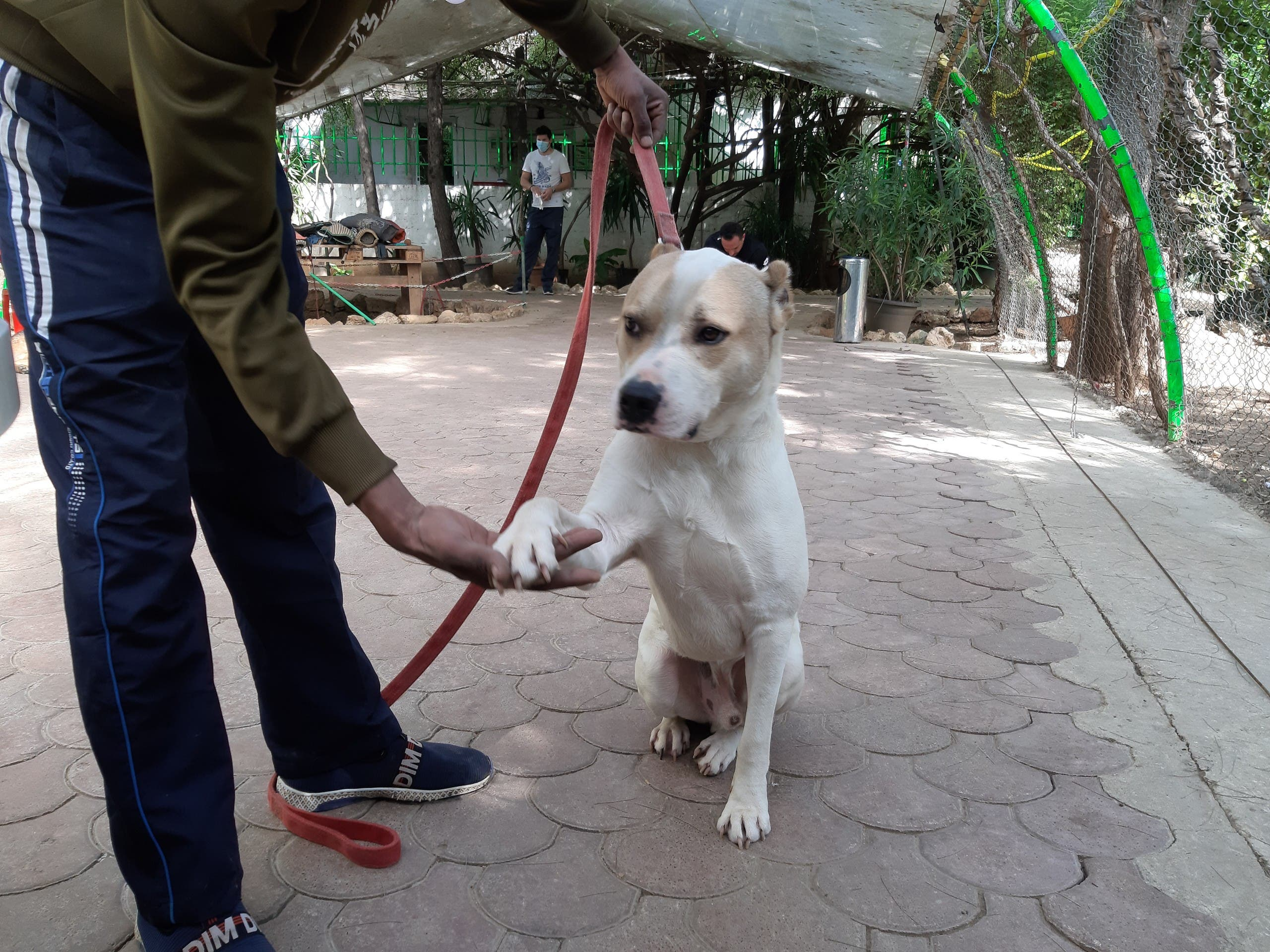 A dog who was rescued after being abandoned in Lebanon is shown at Sarwat Elasmar's kennel. (Abby Sewell)