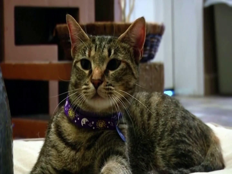 Two New York cats test positive for coronavirus
