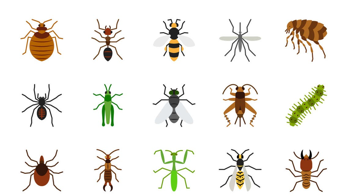 Danger Insect simple flat color icons vector set stock illustration