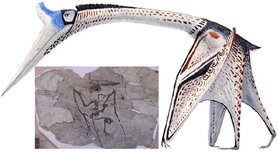 أحد الزواحف الطائرة هو تيروسور، المميز بحسب أحفوريته التي عثروا عليها بمنقار طويل ينتشل الطريدة انتشالاً