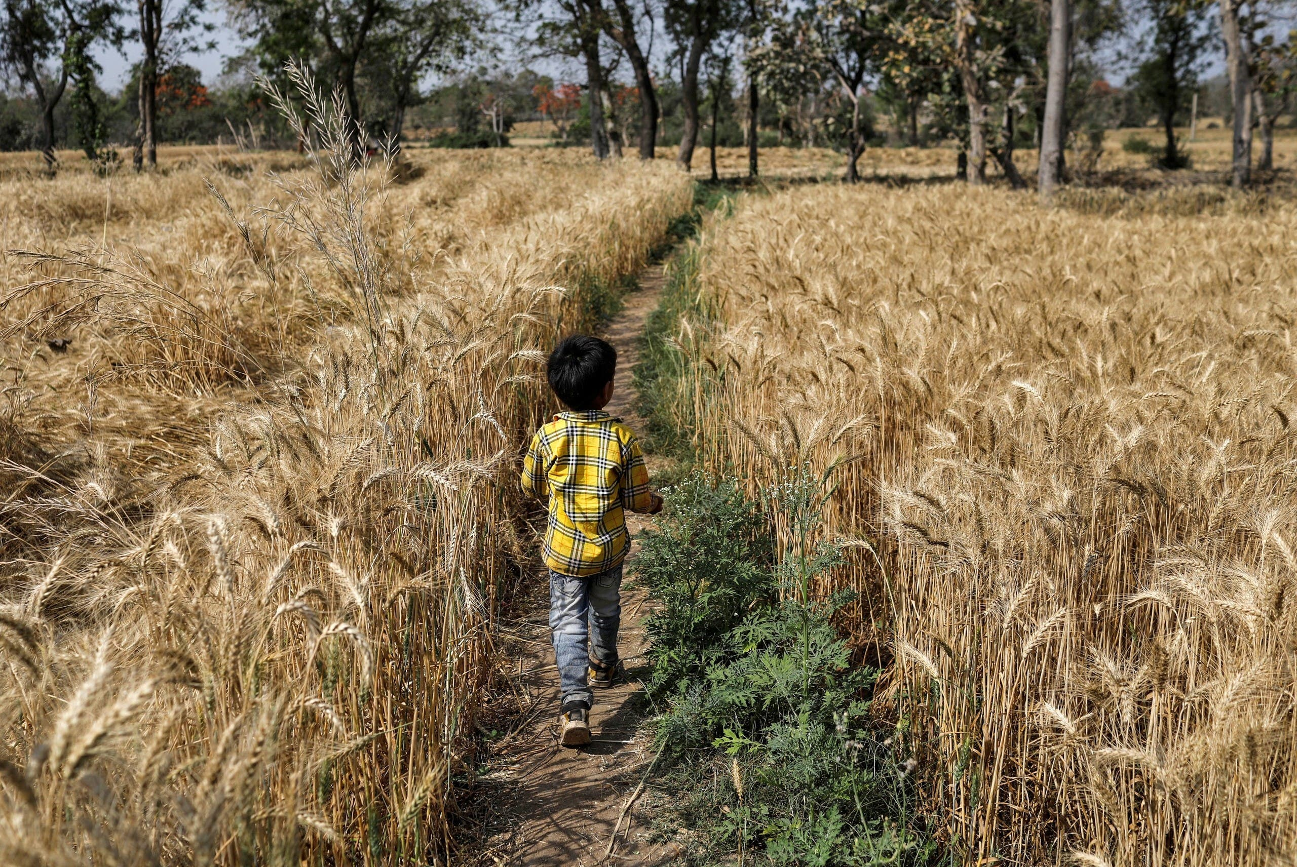 Shivam Kushwaha, son of Dayaram Kushwaha and Gyanvati, walks through a field during nationwide lockdown in India due to the coronavirus. (Reuters)