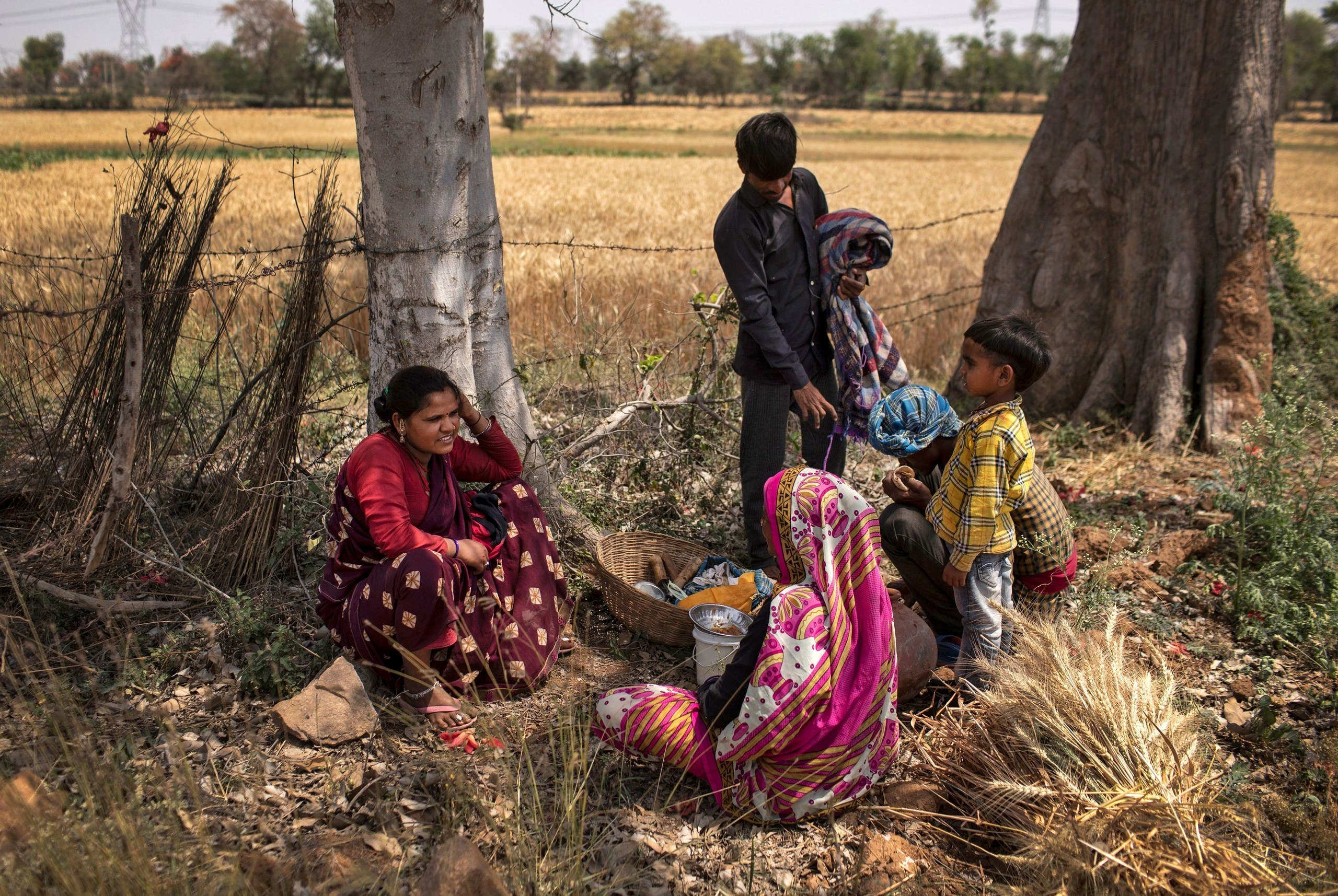 Dayaram Kushwaha eats lunch with his family as they take a break from harvesting wheat, during nationwide lockdown in India to slow the spread of the coronavirus, in Jugyai village in the central state of Madhya Pradesh, India, on April 8, 2020. (Reuters)