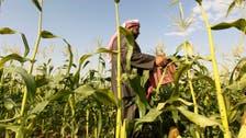 بيور هارفست تجمع 50 مليون دولار للزراعة في الصحراء