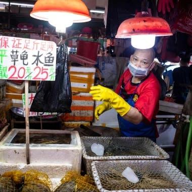 رغم كارثة كورونا..الصينيون يواصلون بيع الضفادع والسلاحف