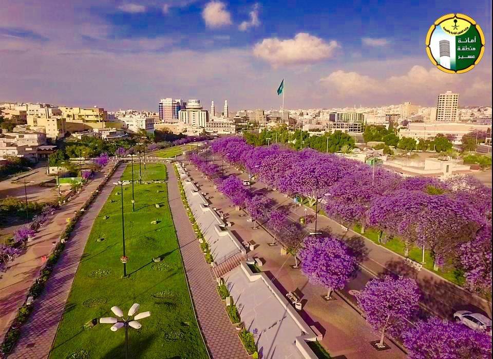 Jacaranda trees in bloom in Abha, Saudi Arabia. (Asir Municipality, Twitter)