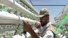 Syrian builds rooftop hydroponic farm to beat odds of economic hardship