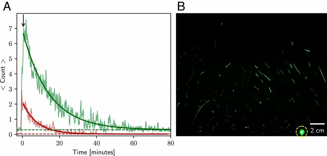 Chart (A) shows particle count per frame versus time, with the red curve representing the top 25 percent in scattering brightness and the green curve representing the rest. Image (B) shows the sum of 144 consecutive frames (spanning 6 s) extracted shortly after the end of the 25-s burst of speaking. (Research by Stadnytskyi et al.)