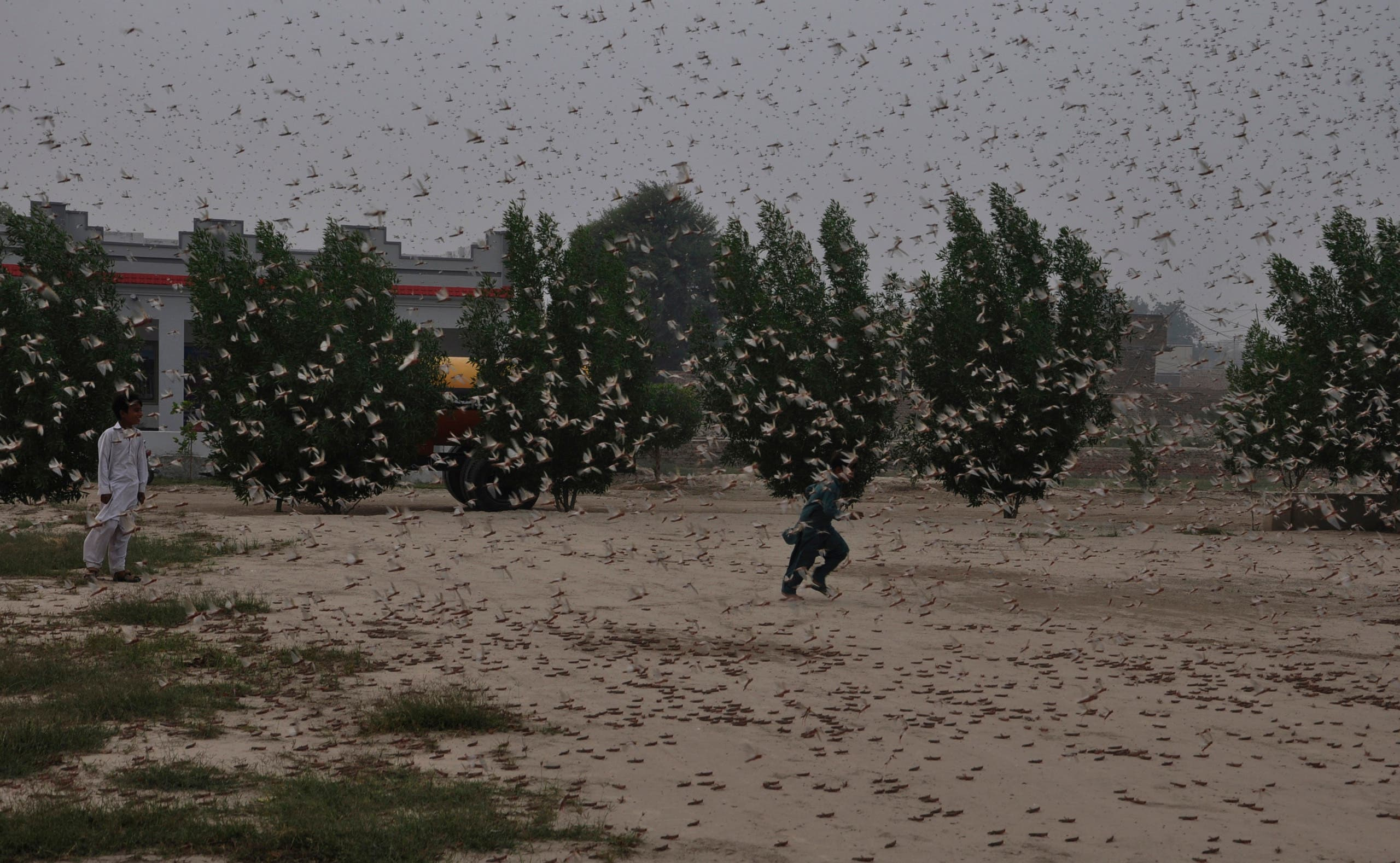 Pakistani children try to avoid locusts swarming in Rahimyar Khan, Pakistan, on Wednesday, November 13, 2019. (AP)