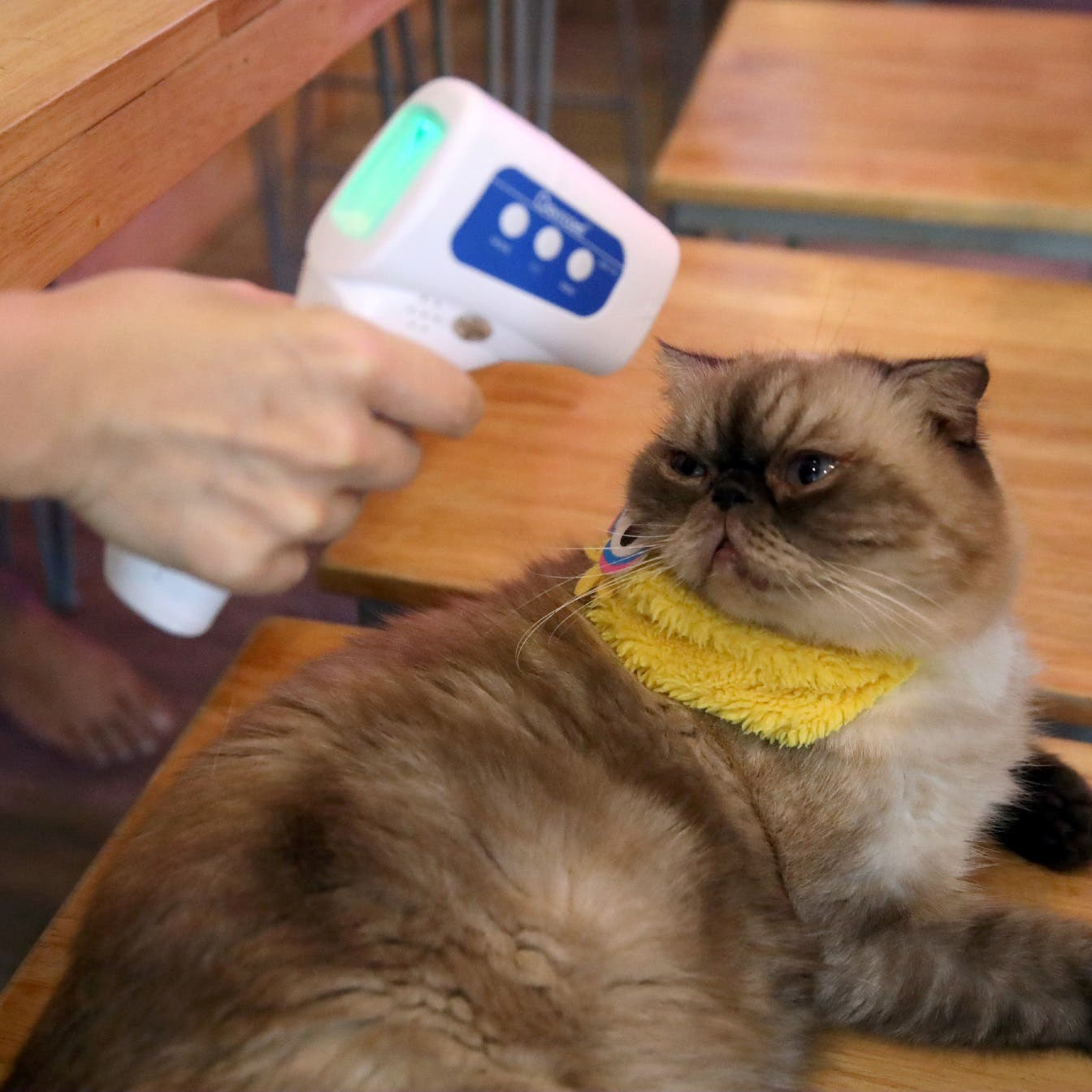 Coronavirus: Pets can catch COVID-19 from owners, study finds