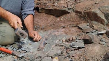 صور لحفرية آخر ديناصور مفترس على كوكب الأرض