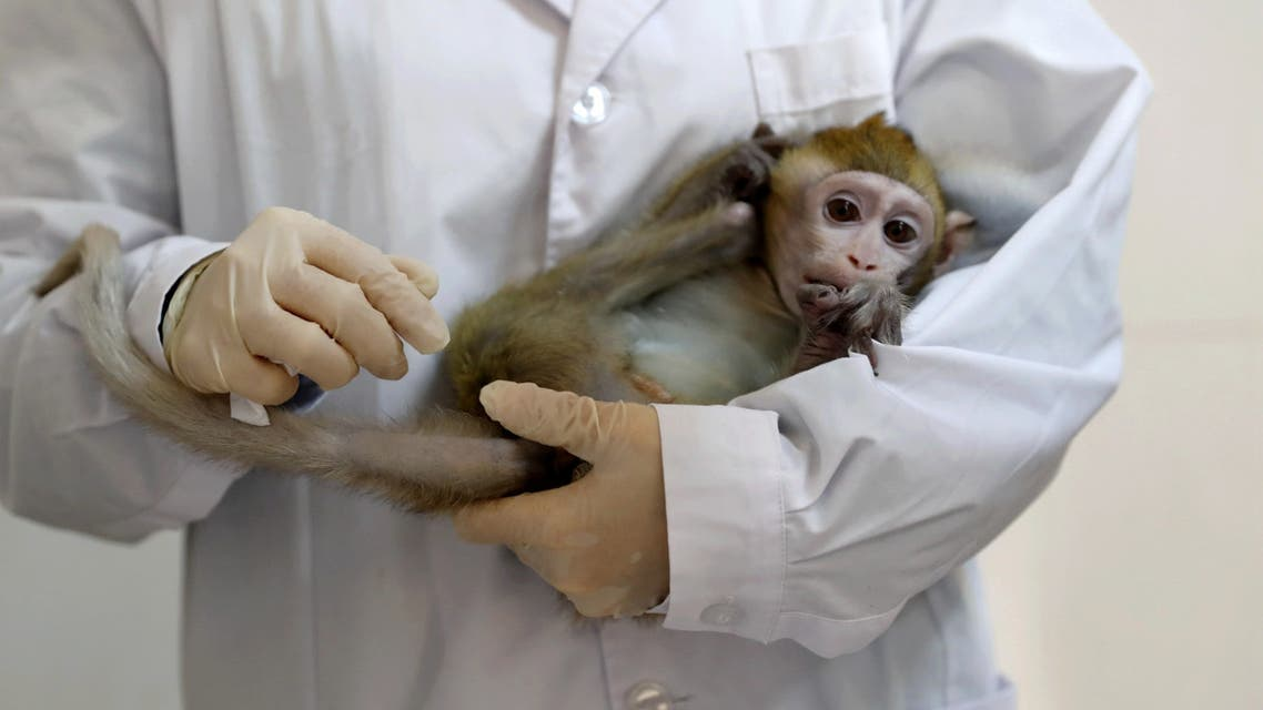 A lab technician holds a gene-edited macaque with circadian rhythm disorders, which was used to make five cloned monkeys, in a lab at the Institute of Neuroscience of Chinese Academy of Sciences in Shanghai, China January 18, 2019. (File photo: Reuters)