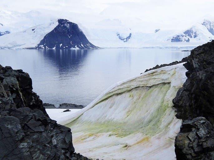ثلج القطب الجنوبي سيصبح أخضر.. بسبب تغيير المناخ