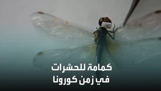 شاهد كمامة مصغرة حجمها مليمترات للحشرات!