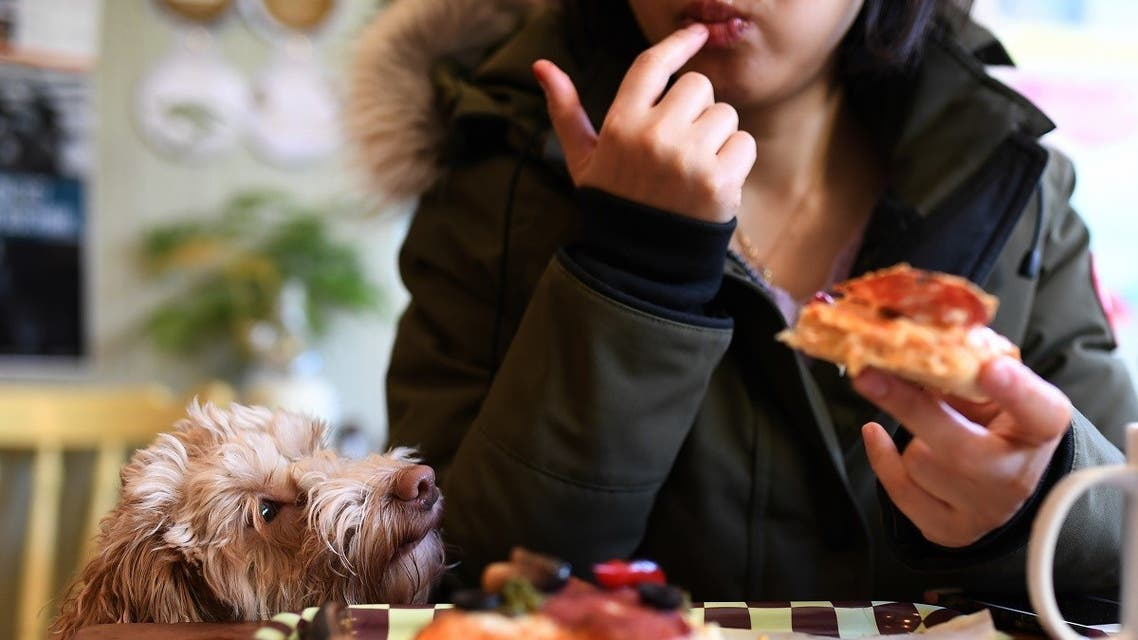 Cupid the cockapoo dog looks at pizza that it's owner is eating in a cafe in Dublin, Ireland, January 25, 2018. (Reuters)