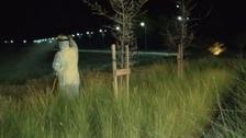شاهد أسراباً من الجراد في دبي.. والبلدية تطمئن