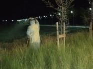 شاهد أسراب من الجراد في دبي.. والبلدية تطمئن