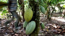 Ivory Coast rejects US-sponsored report showing rising child labor in cocoa sector