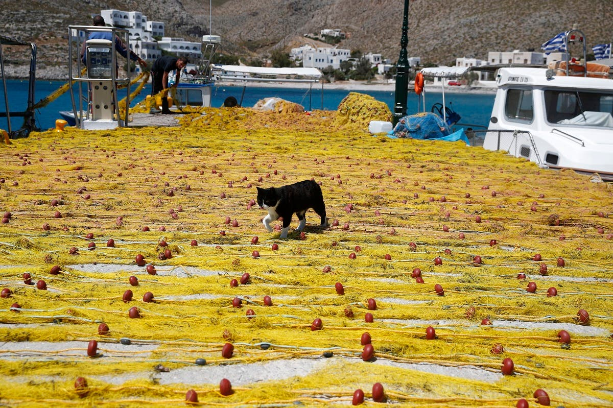 A cat walks on fishermen's nets on the Aegean Sea island of Folegandros, Greece, on Monday, May 25, 2020. (AP)