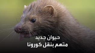حيوان جديد متهم بنقل فيروس كورونا للبشر