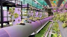 UAE's high-tech urban, vertical farms shore up food security  during coronavirus