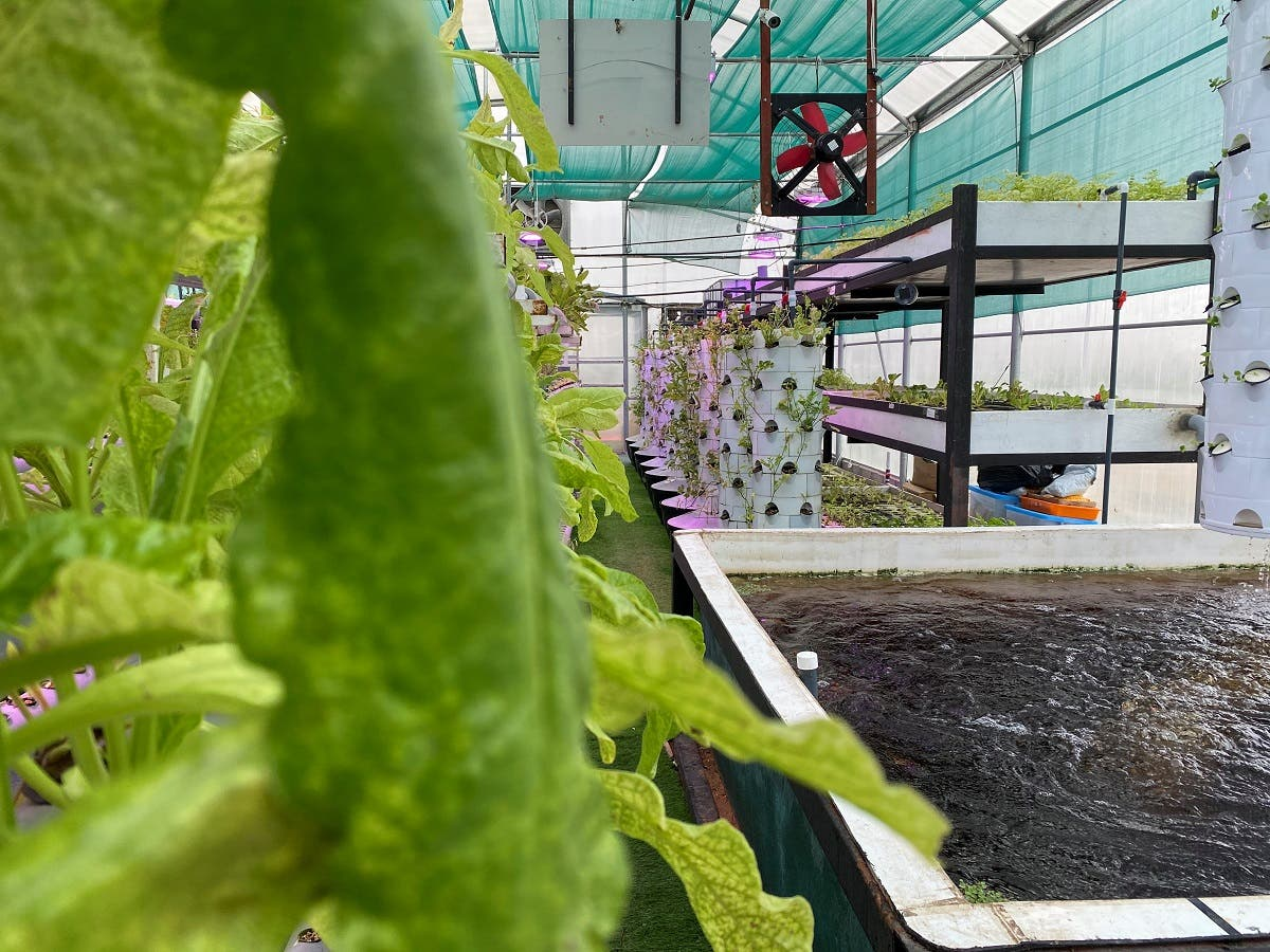 General view of a hi-tech vertical farm in Sharjah where local farmers cultivate various crops. (Reuters)