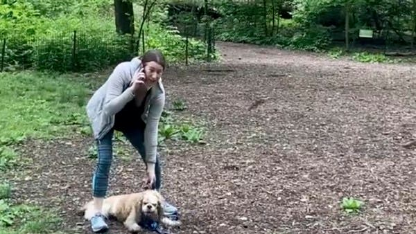 Racist confrontation in NY Central Park ends up with woman getting fired from job