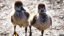 Coronavirus: Lockdown encourages baby boom among animals in Siberian zoo