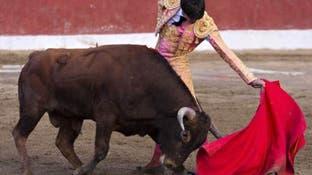 باورهای نادرستی که در ذهنیت عموم جا افتاده؛ رنگ قرمز باعث عصبانی شدن گاو نمیشود