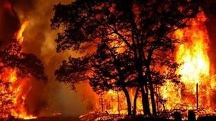 شعله کشیدن دوباره جنگل های خائیز و عدم اهتمام مسئولان
