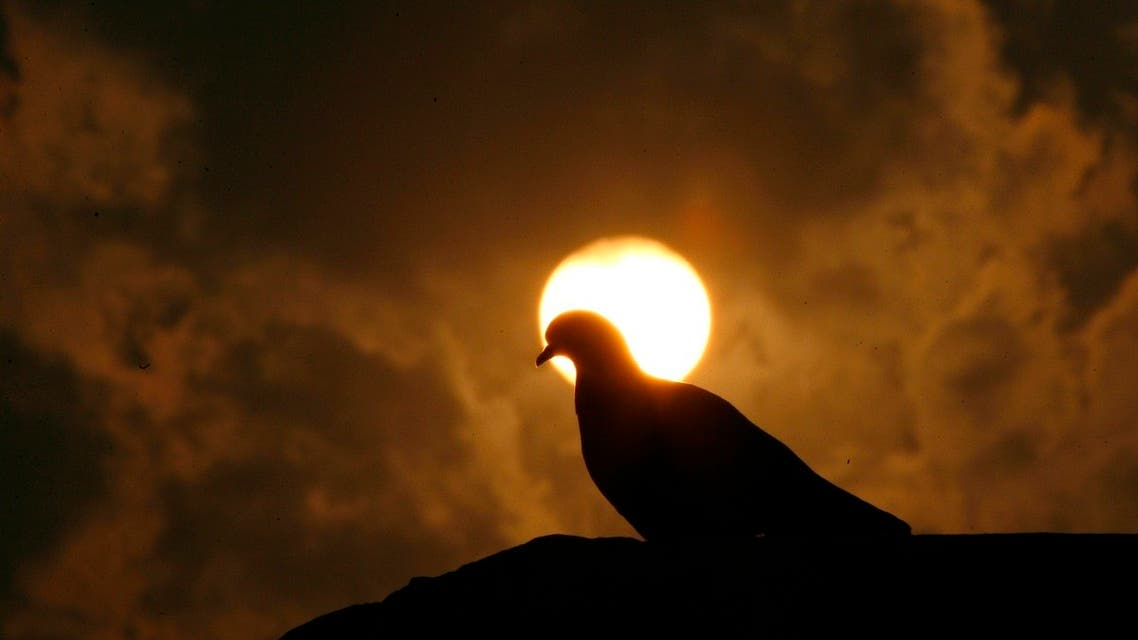A pigeon is silhouetted against the setting sun during the winter evening in New Delhi December 11, 2007. (Reuters)